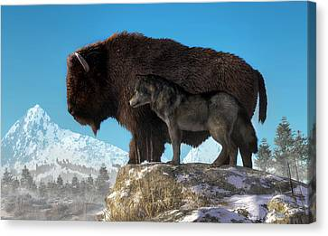 Buffalo And Wolf Canvas Print