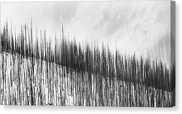 Burnt Trees Canvas Print