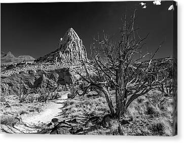 Capitol Reef Np - But, It's A Dry Heat... Canvas Print