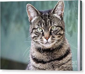 Cat Posing For The Camera. Canvas Print