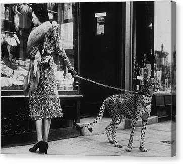 Cheetah Who Shops Canvas Print
