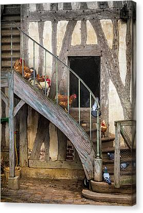 Chickens Of Versailles Canvas Print