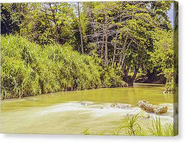 Country River In Trelawny Jamaica Canvas Print