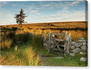 Dartmoor Gate At Sunrise II Canvas Print