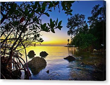 Dawn Through The Mangroves  Canvas Print