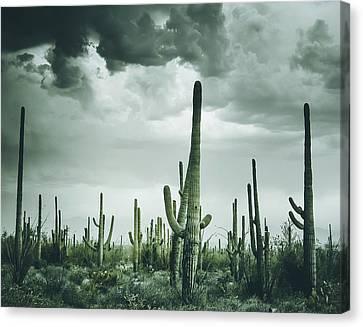 Desert Storm In Arizona Canvas Print