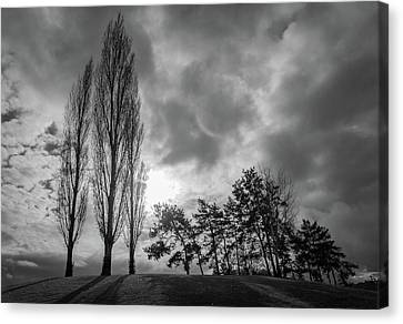 Dramatic Fall Trees Canvas Print
