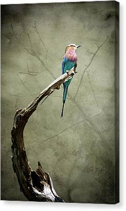 Dreams Of A Lilac Breasted Roller Canvas Print