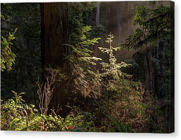 Enchanted Daybreak Canvas Print
