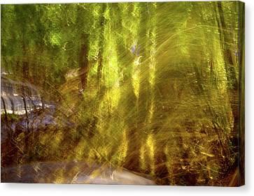 Enlightened Canvas Print