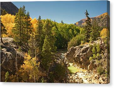 Fall On Independence Pass Canvas Print