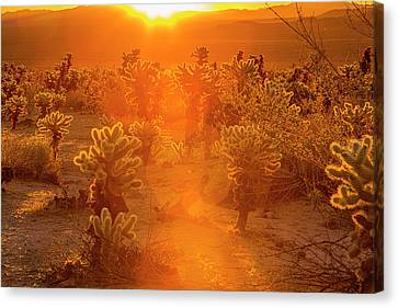 Fiery Sunrise Among The Cacti Canvas Print
