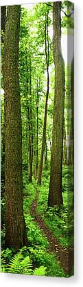 Footpath Between The Trees Canvas Print