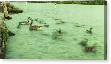 Ghost Ducks Canvas Print