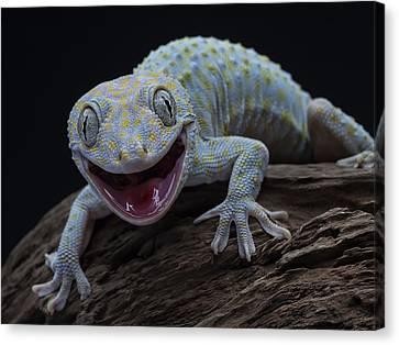 Gecko Lézard Reptile Animal TOILE murale ART Photo Print A4
