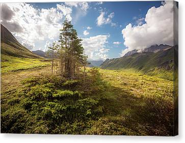 Canvas Print featuring the photograph Haiku Forest by Tim Newton
