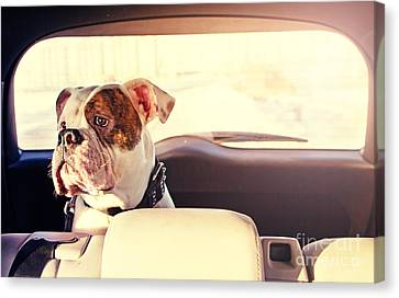 Happy Dog Traveling In The Car Boot Canvas Print by Little Moon
