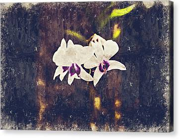 Hawaiian Tree Orchid Canvas Print