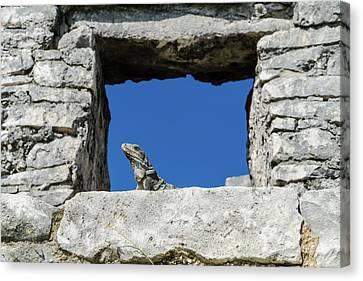 Iguana At Tulum Ruins Canvas Print