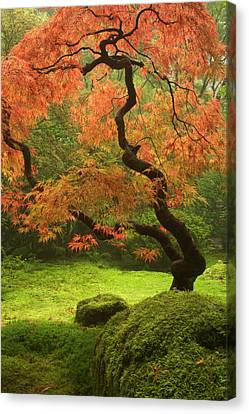 Japanese Maple In Fall Color At Photograph By Danita Delimont