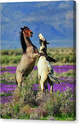 Just Horsing Around Canvas Print