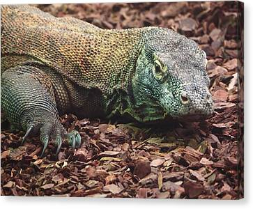 Komodo - Supporting World Wide Fund For Nature Canvas Print
