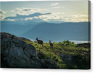 Kuipers Peak Deer Canvas Print