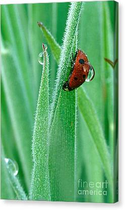 Ladybug Funny Wildlife Large Wall Art Poster Print