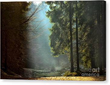 Shining Through Trees Treble Canvas Print Large Picture Wall Print