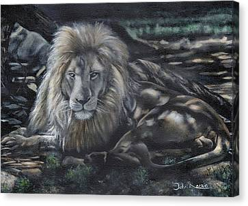 Lion In The Shade Canvas Print