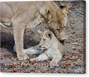 Lioness And Her Cub Canvas Print