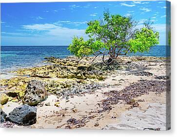 Lone Shore Tree Canvas Print