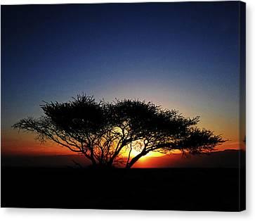Lone Acacia Tree At Sunrise Canvas Print