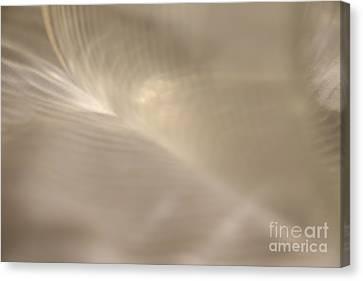 Lumina White Spirit Canvas Print