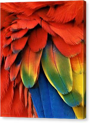 Macaw Feathers I I I Canvas Print