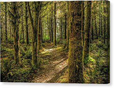 Mirkwood Path Canvas Print