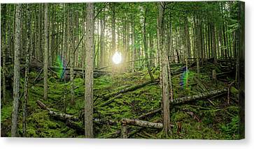 Monashee Forest Sunset With Flare Canvas Print