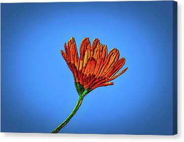Orange At Blue Thick Painting #i3 Canvas Print