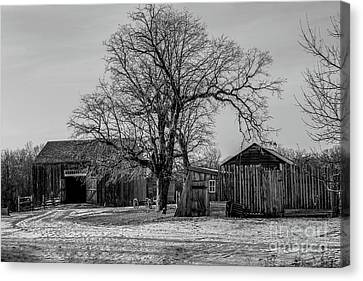 Out In The Barn Yard Canvas Print