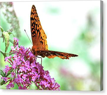 Overexposed Butterfly Canvas Print