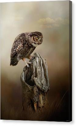 Perching In Anticipation Canvas Print