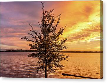 Percy Priest Lake Sunset Young Tree Canvas Print