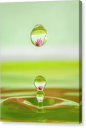 Pink Flower Water Drops Canvas Print