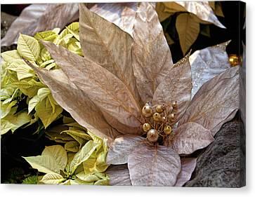 Poinsettia Winter Decoration Canvas Print