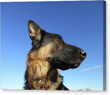 Portrait Of A German Shepherd Dog Canvas Print