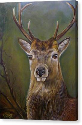 Red Deer Stag Canvas Print by Janet Silkoff