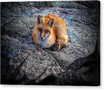 Red Fox V.2 Canvas Print