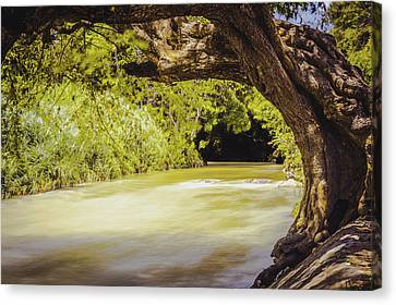 River Banks In Trelawny Jamaica Canvas Print