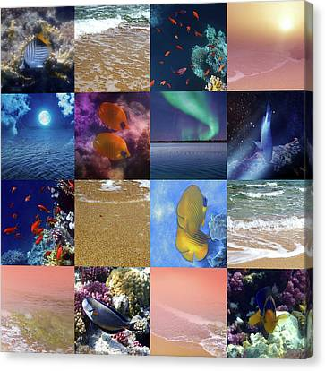 Sealife And Seashore Collage Canvas Print