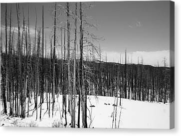 Silence In The Snow Canvas Print